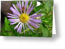 Bee On Wildflower Greeting Card