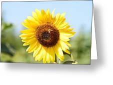 Bee On Yellow Sunflower Greeting Card
