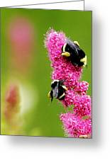 Bee Pink Greeting Card