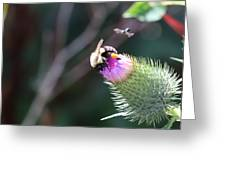 Bee Pollination Greeting Card