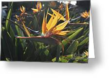 Bee Resting On The Petals Of A Bird Of Paradise  Greeting Card