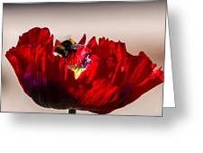 Bee Right Back With Red Flower Greeting Card
