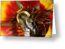 Bee Six - Greeting Card