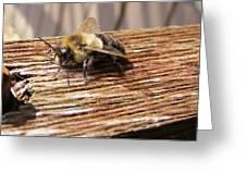 Bee-u-tiful Greeting Card
