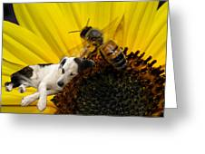 Bee With Dog Greeting Card