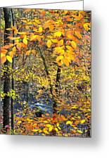 Beech Leaves Birch River Greeting Card