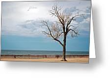 Beech On Beach Greeting Card