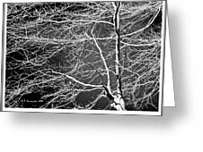 Beech Tree Branches, Light And Shadow Greeting Card