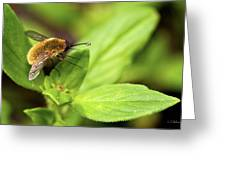 Beefly Greeting Card