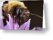 Bee's Eye Greeting Card
