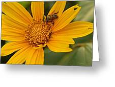 Bees Love Coreopsis Greeting Card