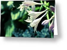 Bees Love Hastas Greeting Card