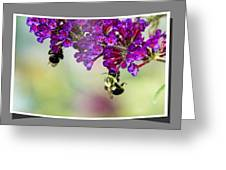 Bees On Butterfly Bush Framed Greeting Card
