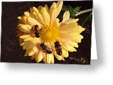 Bees On Feast Greeting Card