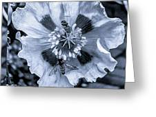 Double Bees On Poppy Bw Greeting Card