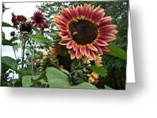 Bees On Sunflower 101 Greeting Card