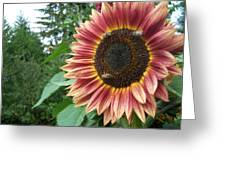 Bees On Sunflower 102 Greeting Card