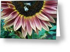 Bees On Sunflower 107 Greeting Card