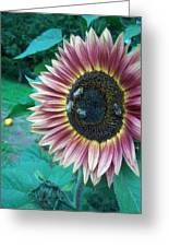Bees On Sunflower 109 Greeting Card