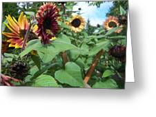 Bees On Sunflower 116 Greeting Card
