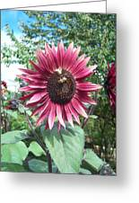 Bees On Sunflower 123 Greeting Card