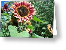 Bees On Sunflower 127 Greeting Card