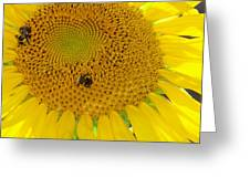 Bees Share A Sunflower Greeting Card