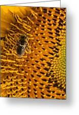 Bee's Sunflower Greeting Card