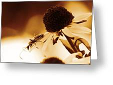 Beetle And Black Eyed Susan Greeting Card
