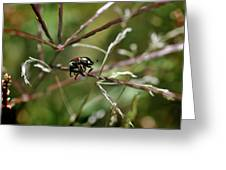 Beetle Balances On Branch Greeting Card