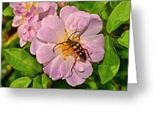 Beetle In A Rose 003 Greeting Card