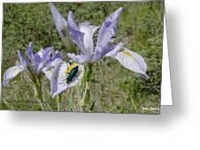Beetle On Iris Greeting Card