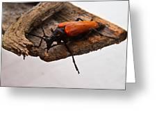 Beetle Pondering Greeting Card