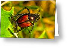 Beetle Take-off Greeting Card