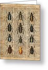 Beetles Bugs Zoology Illustration Vintage Dictionary Art Greeting Card