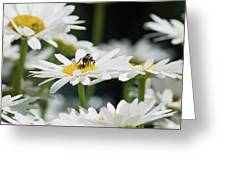 Beezy Day Ahead Greeting Card