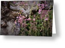 Beginning Of Bloomination Greeting Card