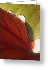 Begonia 1 Greeting Card
