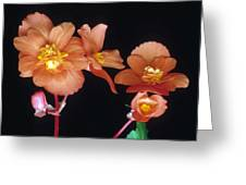 Begonia Buddies Greeting Card