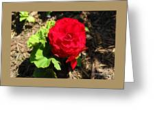 Begonia Flower - Red Greeting Card