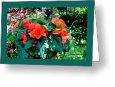 Begonia Plant Greeting Card
