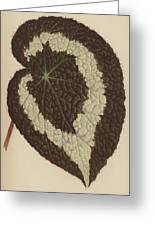 Begonia Rex Greeting Card