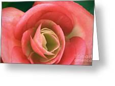 Begonia Rose Greeting Card by Ryan Kelly