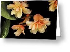 Begonias 2 Greeting Card