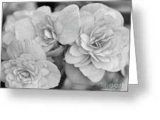 Begonias In Black And White Greeting Card