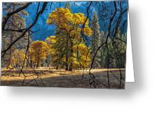 Behind The Branches Greeting Card