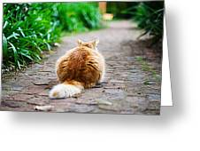 Behind The Cat Greeting Card