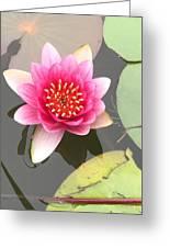 Beijing Lotus Greeting Card