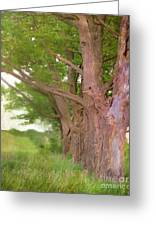Being Old Trees Greeting Card
