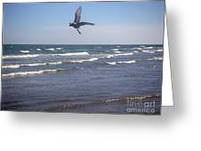 Being One With The Gulf - On Wings Greeting Card